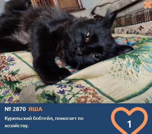 Фото «Главный котик Новосибирска-2021»: почему чёрные кошки приносят своим хозяевам счастье 4