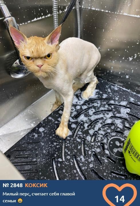 Фото «Главный котик Новосибирска-2021»: почему чёрные кошки приносят своим хозяевам счастье 9