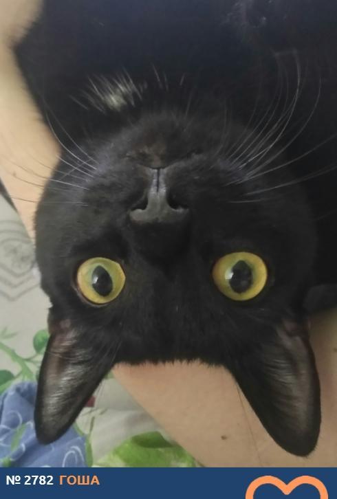 Фото «Главный котик Новосибирска-2021»: почему чёрные кошки приносят своим хозяевам счастье 2