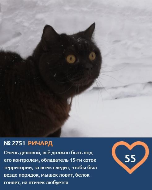 Фото «Главный котик Новосибирска-2021»: почему чёрные кошки приносят своим хозяевам счастье 5