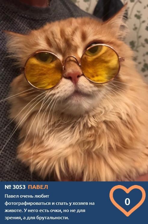 фото Тысячи милых фото участников конкурса «Главный котик Новосибирска-2021» ждут «лайков» 3