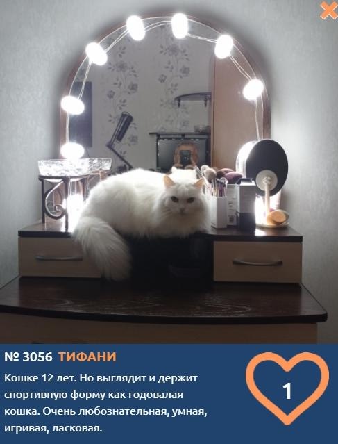 фото Тысячи милых фото участников конкурса «Главный котик Новосибирска-2021» ждут «лайков» 4