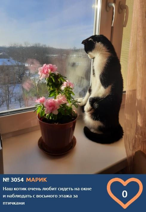 Фото Сотни милых конкурсантов проекта «Главный котик Омска-2021» ждут «лайков» 3
