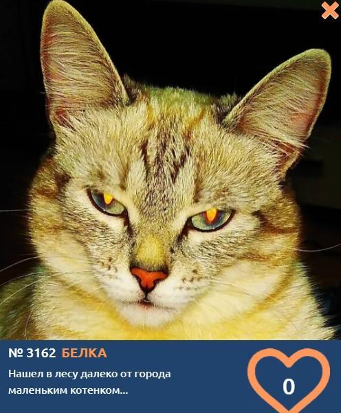 фото Белка из леса переехала жить в квартиру и стала участницей конкурса «Главный котик Новосибирска-2021» 2