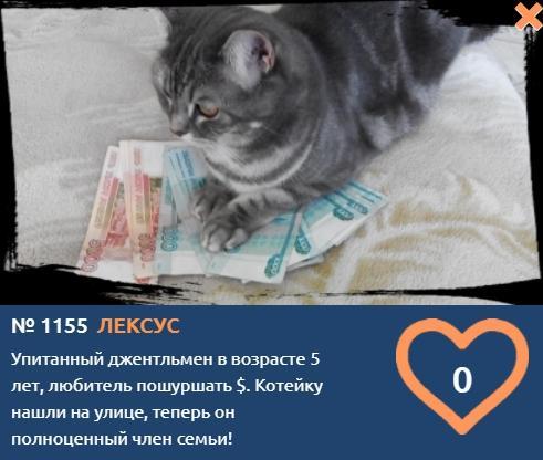 фото «Рублёвый миллиардер» Лексус шуршит купюрами в надежде стать «Главным котиком Томска-2021» 2