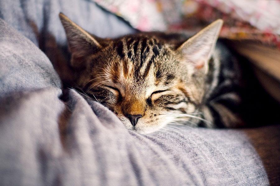 фото Приручить, побаловать, сделать счастливой: 5 мифов о правилах питания и секреты лакомств для кошек 2