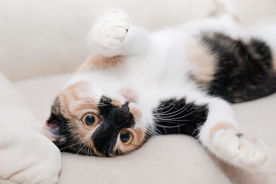 фото Приручить, побаловать, сделать счастливой: 5 мифов о правилах питания и секреты лакомств для кошек 9