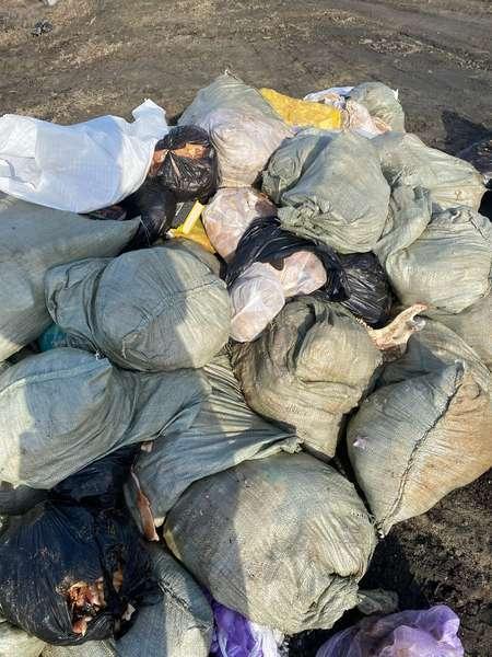 фото Мешки с останками свиней обнаружили на дороге под Новосибирском 3