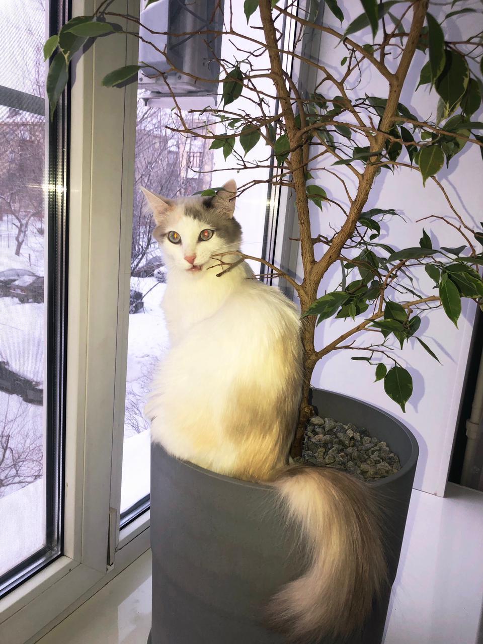 фото Выброшенная на улицу четырёхмесячным котёнком Ами стала седьмой «Главной кошечкой Омска» 4