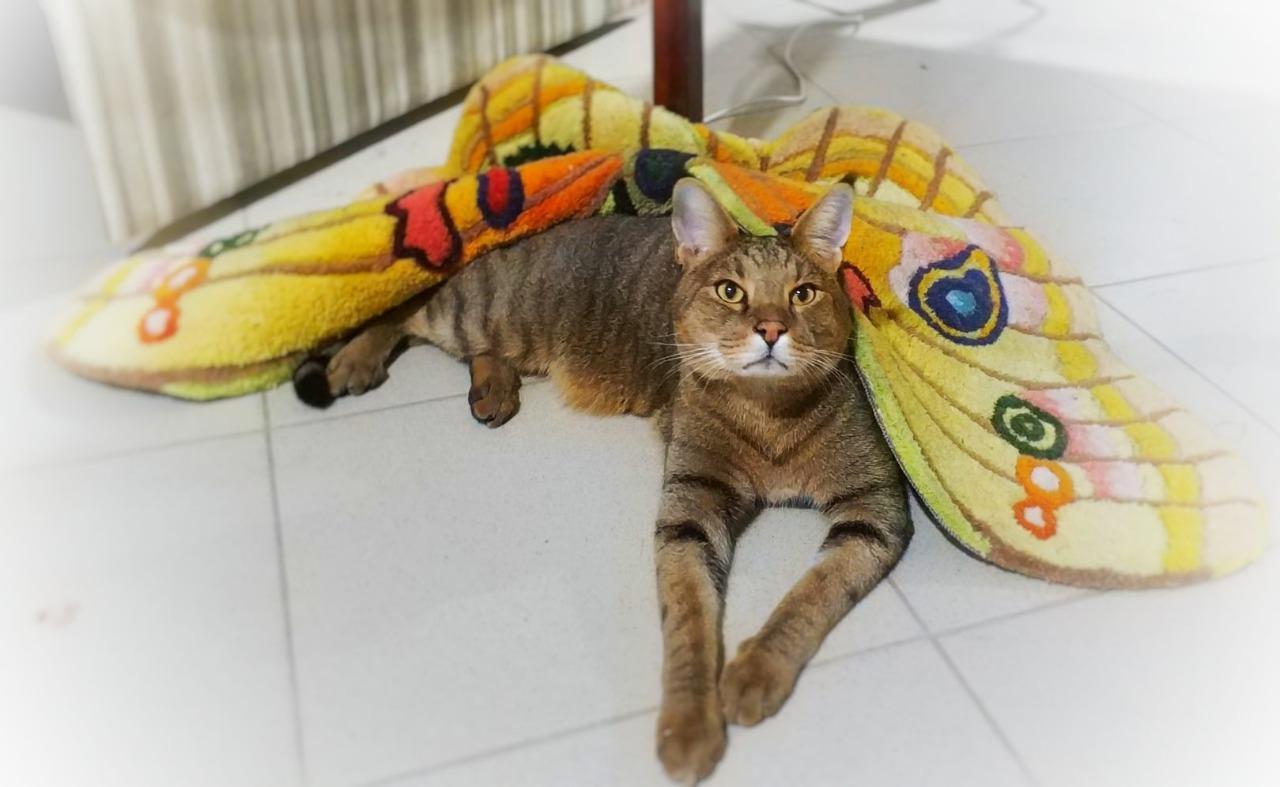 фото «Я думала, вытяжка на плиту рухнет»: как седьмой «Главный котик Новосибирска» породы чаузи чуть не разрушил квартиру хозяйки и перевернул всю её жизнь 7