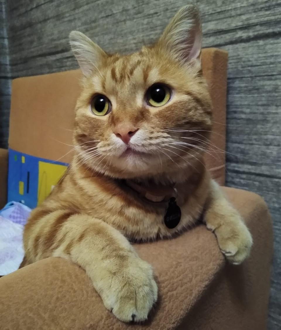 фото Гроза котов, кротов и белок боится дроздов: что известно о пятом финалисте конкурса «Главный котик Томска» рыжем красавце Фише 2