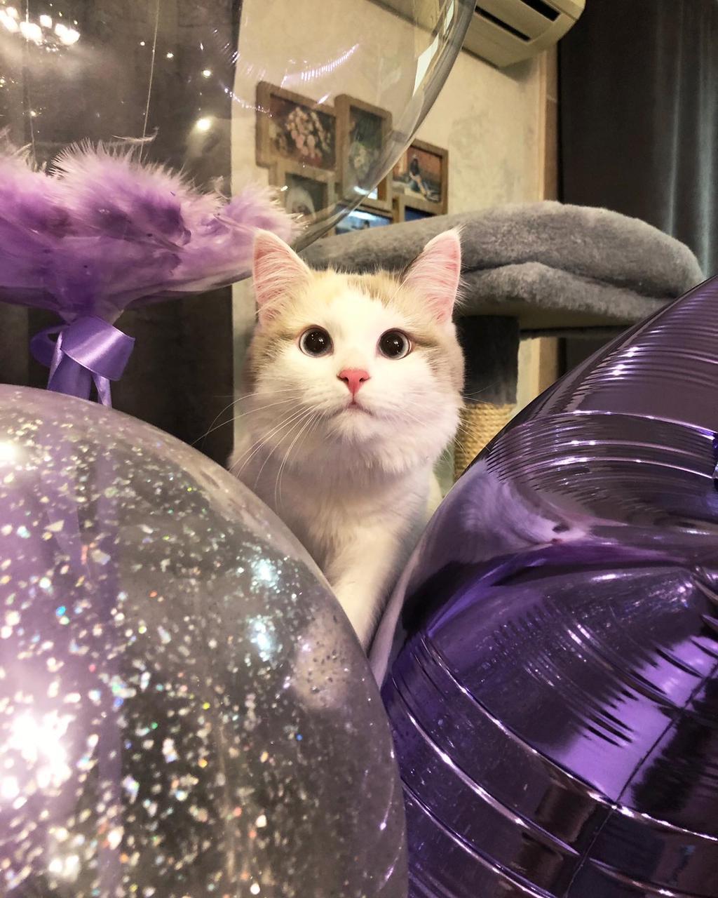фото Выброшенная на улицу четырёхмесячным котёнком Ами стала седьмой «Главной кошечкой Омска» 6