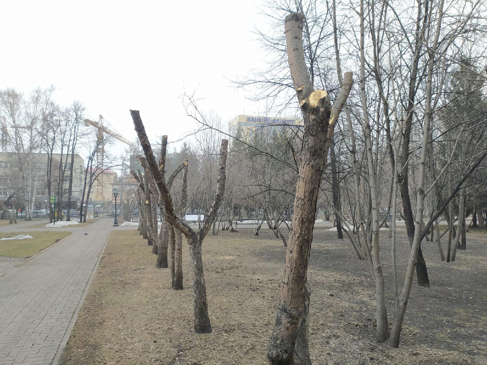 фото В Первомайском сквере Новосибирска обрезали деревья – как в фильме ужасов 7