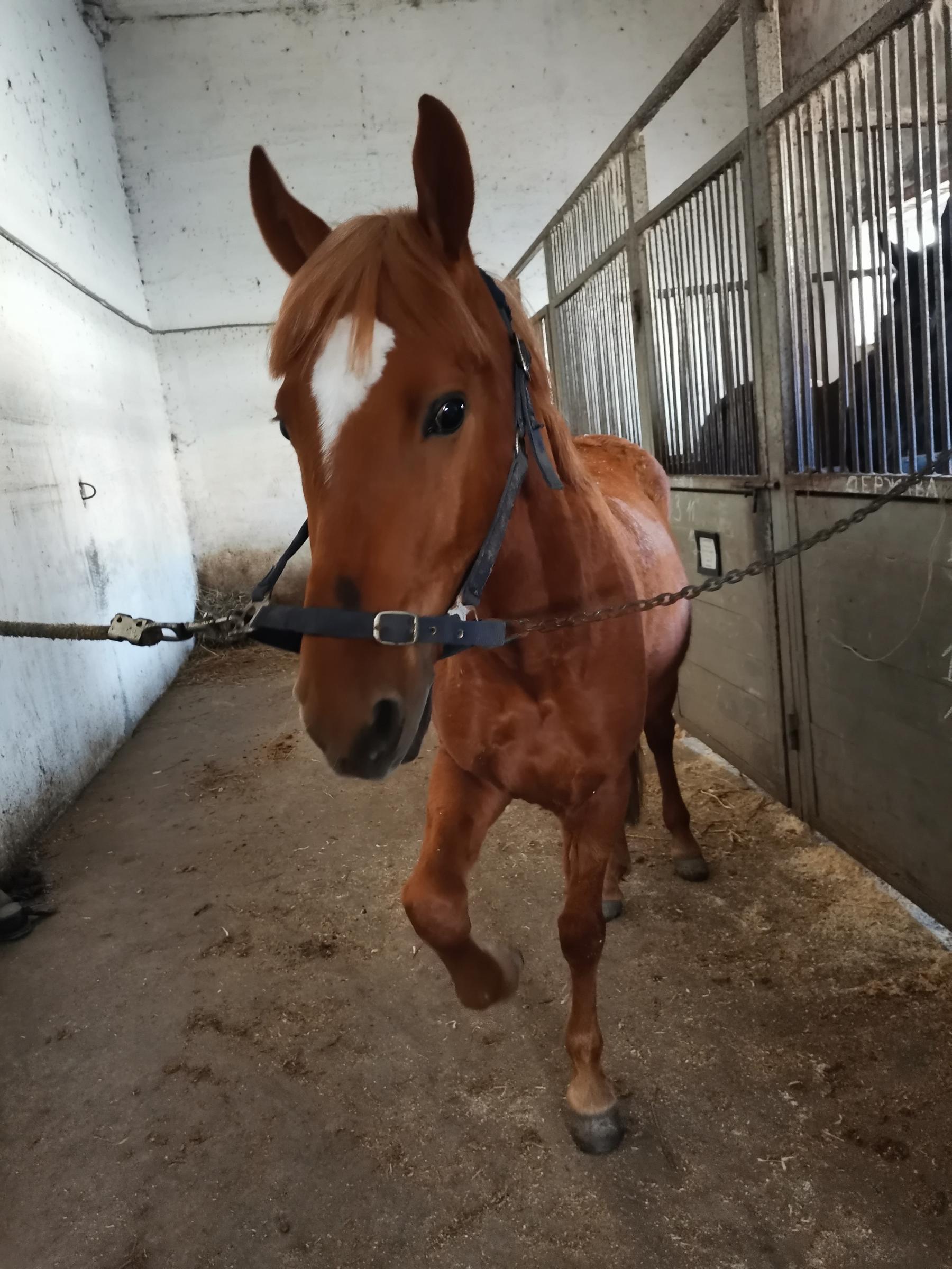 фото Участником конкурса «Главный котик Новосибирска» стал конь по кличке Кот 2