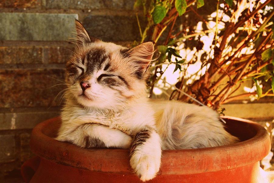 фото Приручить, побаловать, сделать счастливой: 5 мифов о правилах питания и секреты лакомств для кошек 7