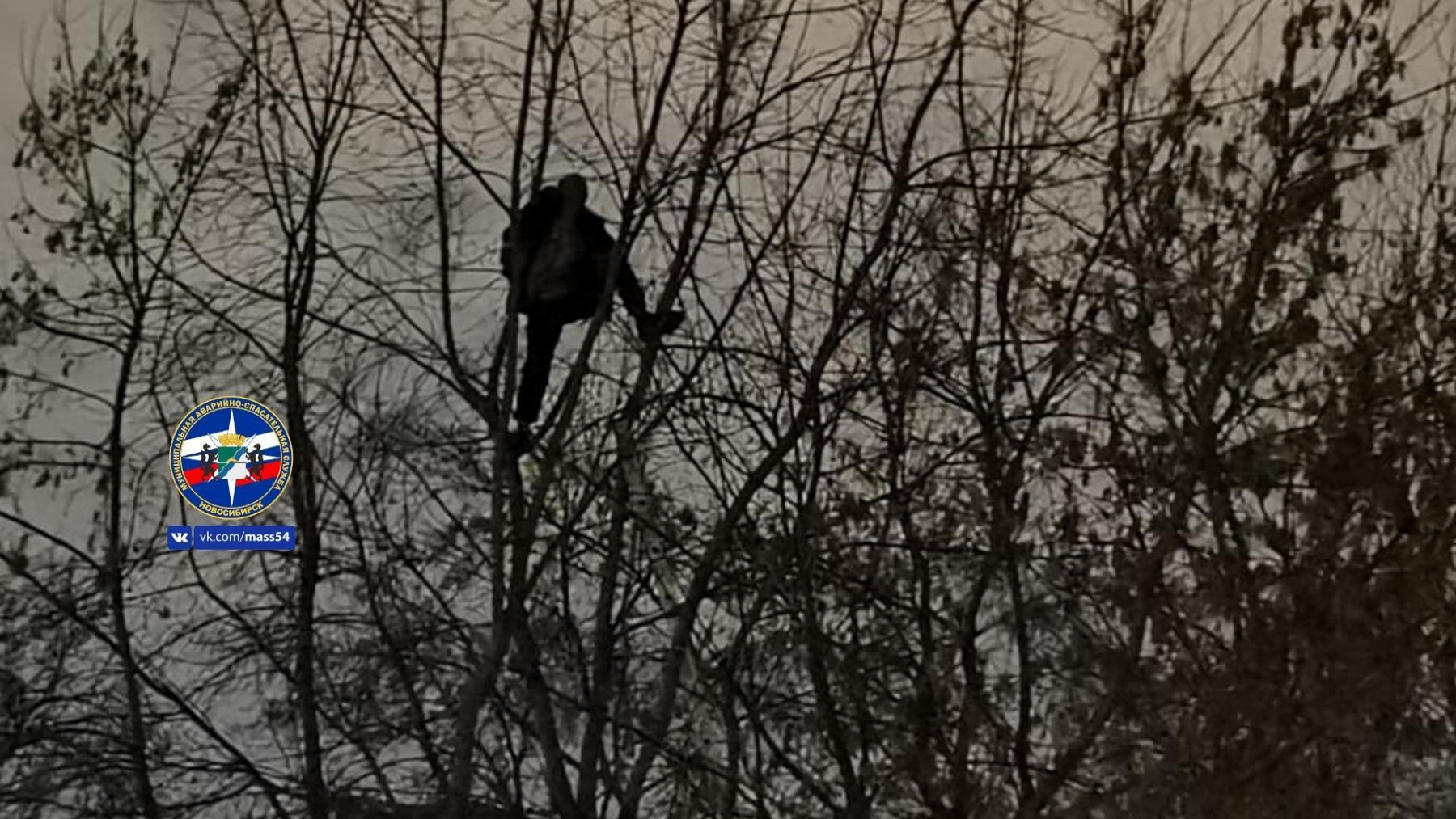 фото Неадекватного мужчину сняли с высокого дерева в Новосибирске 2
