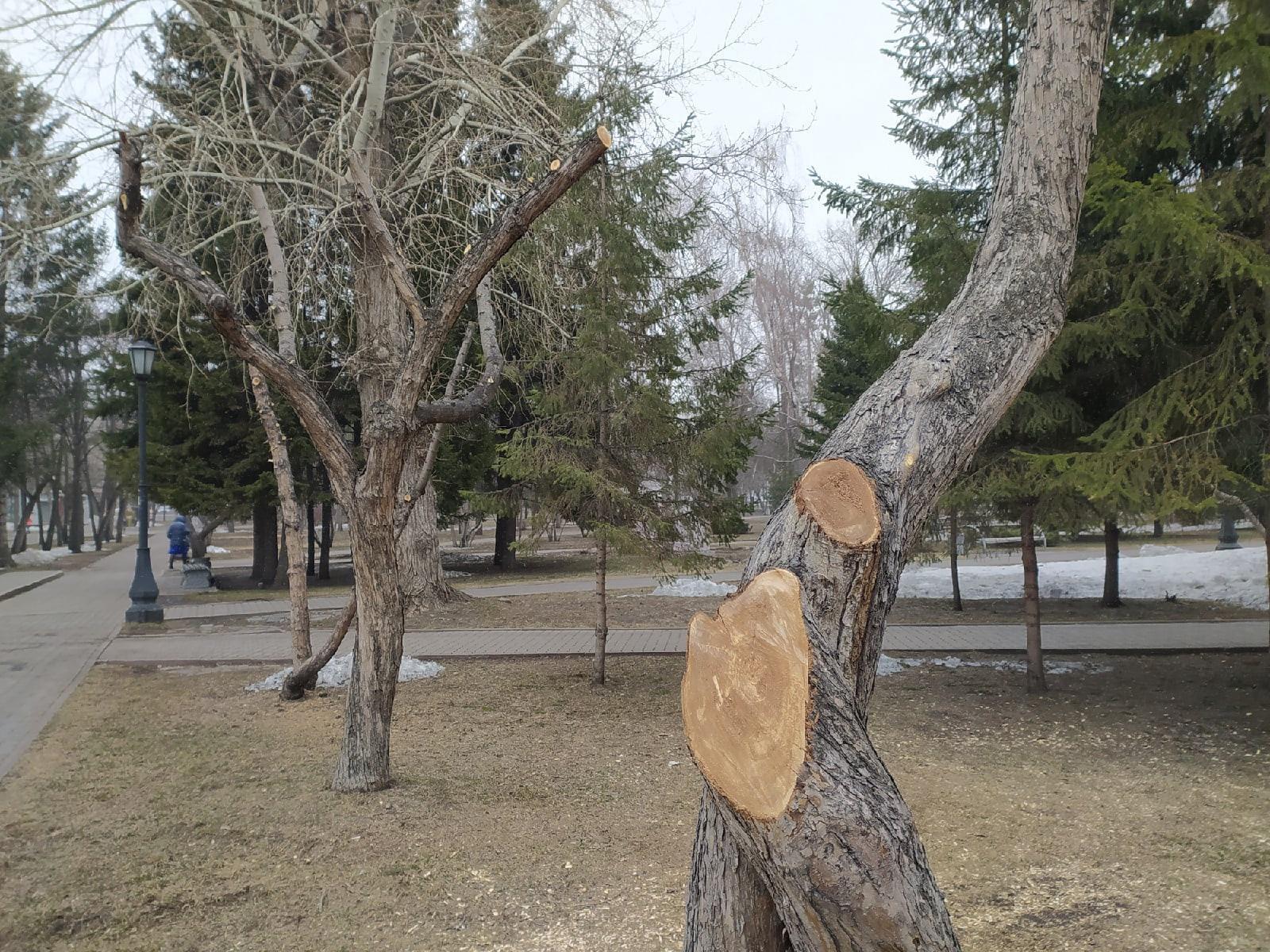 фото В Первомайском сквере Новосибирска обрезали деревья – как в фильме ужасов 5