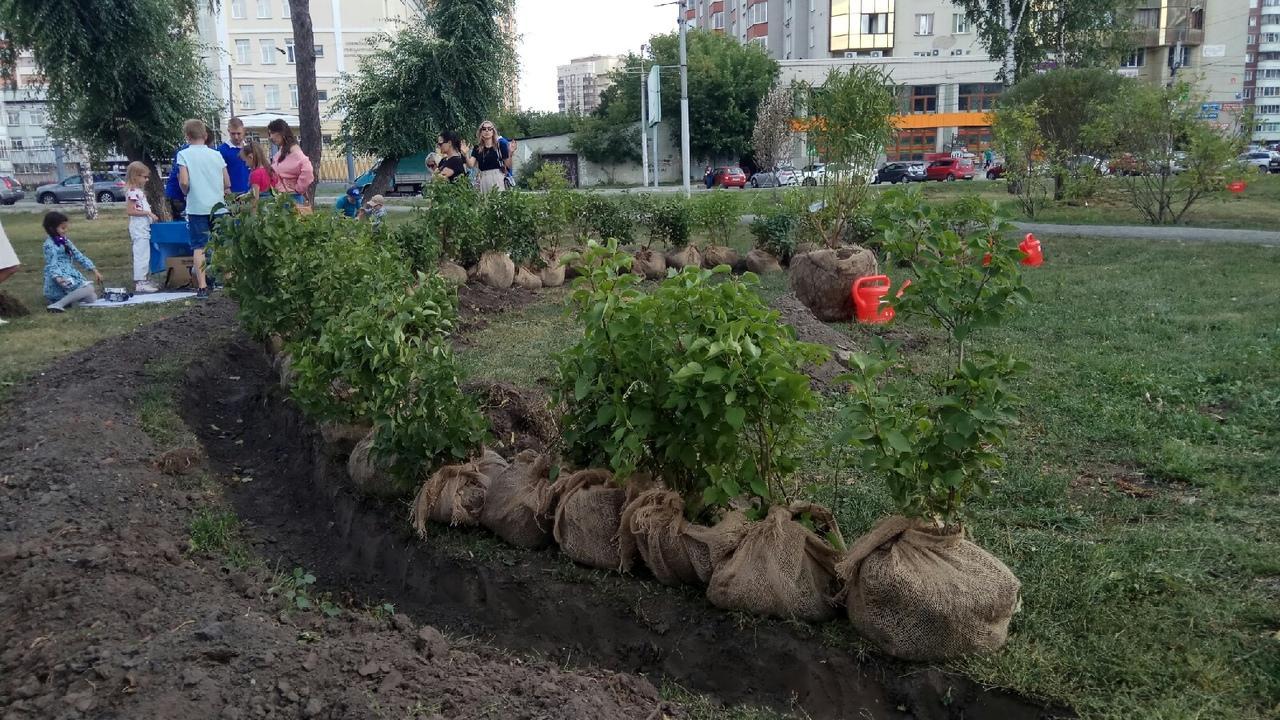 Фото Акция «Посади своё дерево» началась в Новосибирске 2