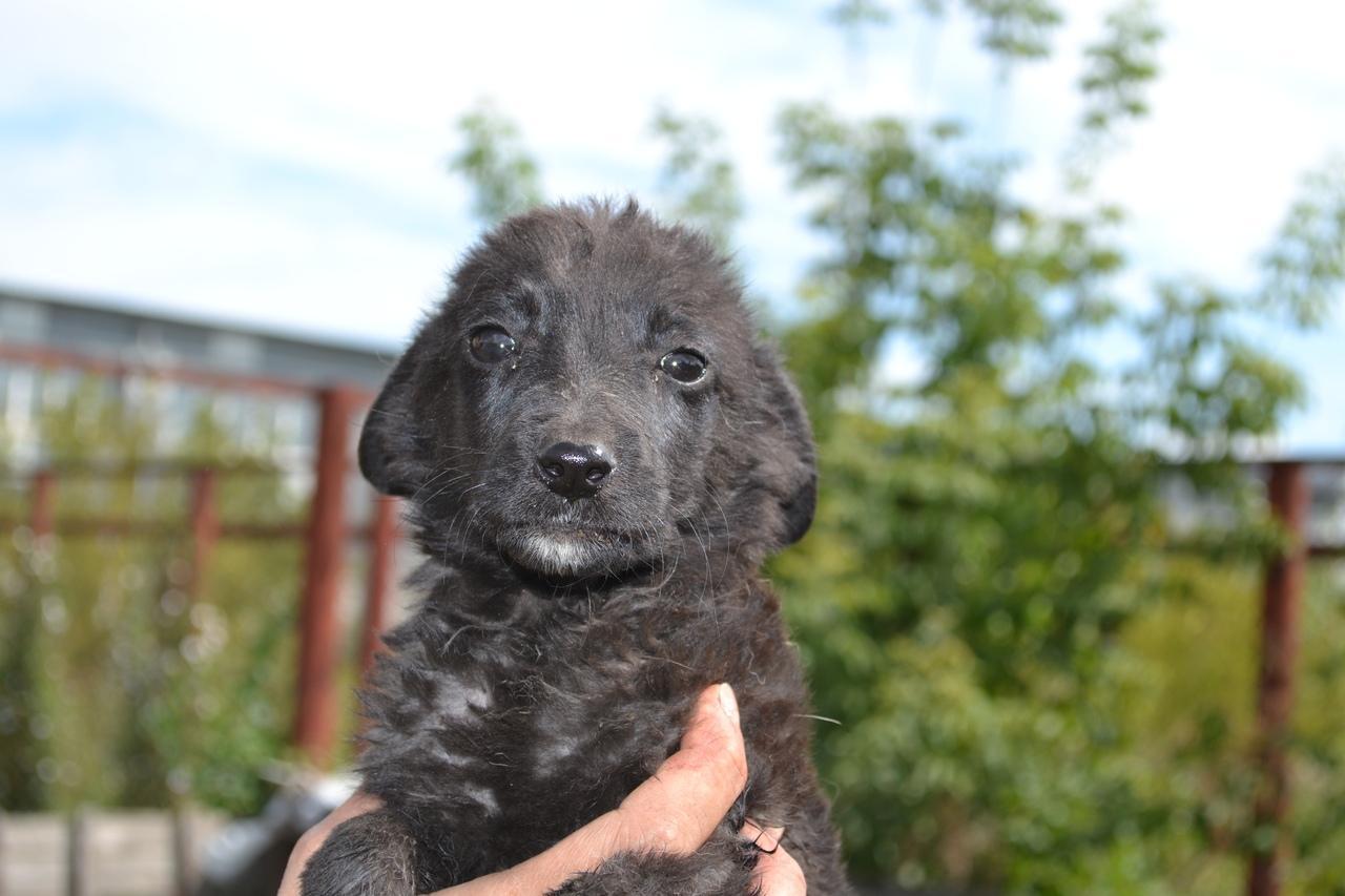 фото Коробку с 14 щенками подбросили к воротам центра помощи животным в Новосибирске 2