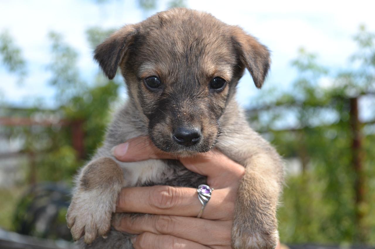 фото Коробку с 14 щенками подбросили к воротам центра помощи животным в Новосибирске 3