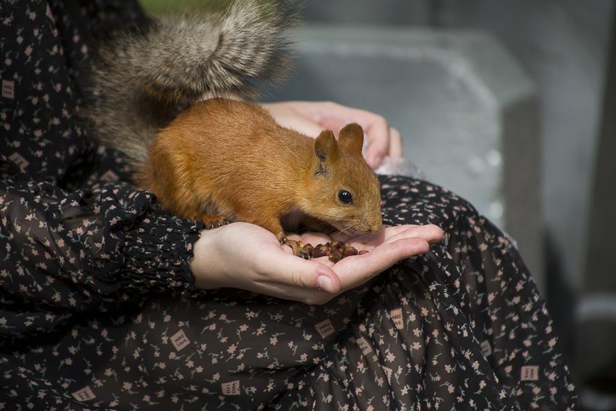 Фото Помогите едой: в новосибирском Академгородке оголодали белки 2