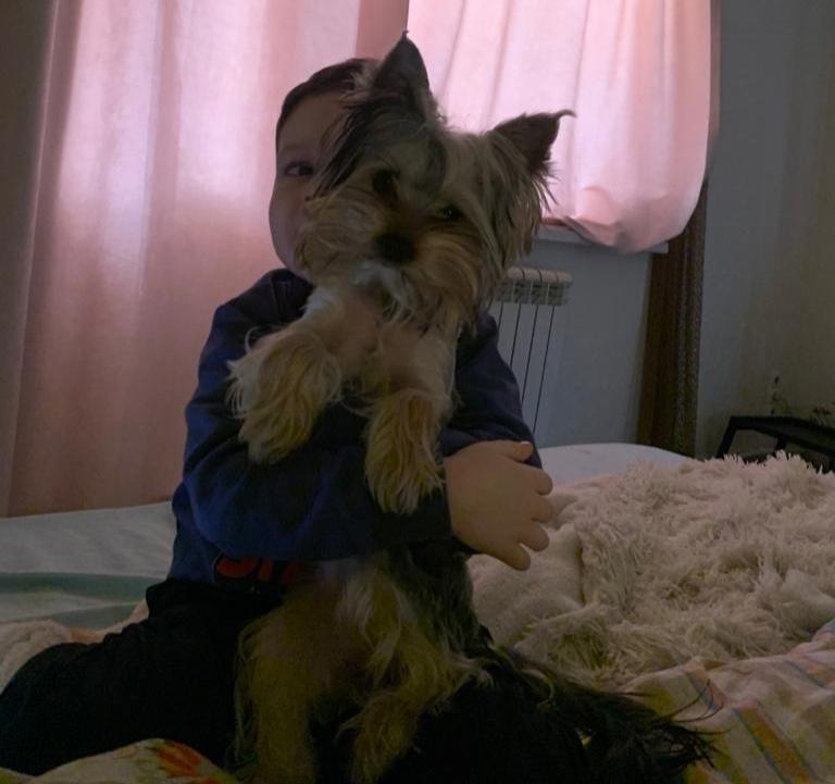 Фото «Банщица она у нас»: последняя финалистка конкурса «Главный пёсик Новосибирска» Соня любит париться в бане и играть с кошкой 2