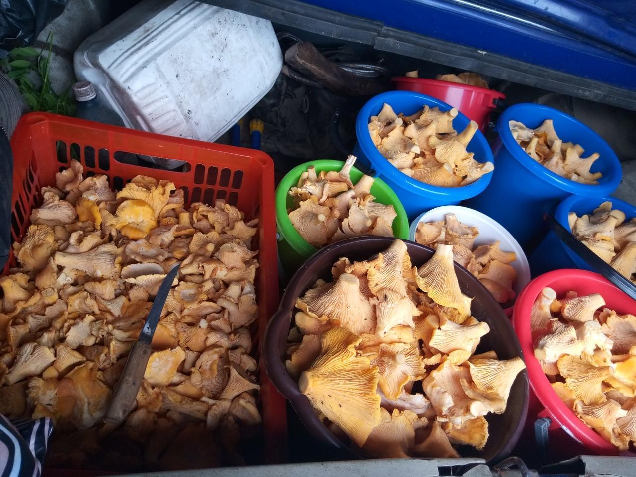 Фото «Охота удалась!»: жители Новосибирской области назвали места, где можно собирать грибы прямо сейчас 6