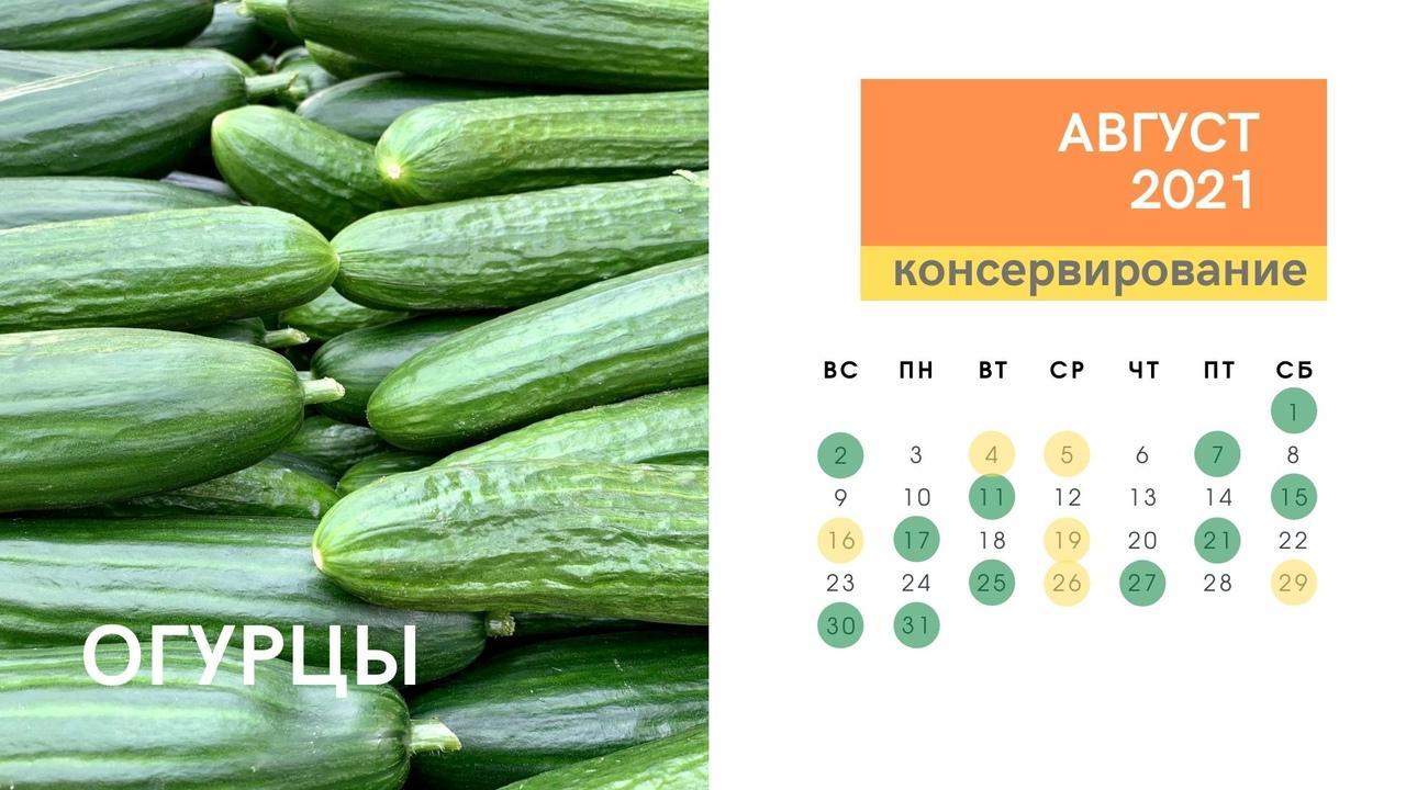 Фото Календарь консервирования и заготовок на зиму в августе 2021 года: огурцы, кабачки, помидоры, малина, вишня 2