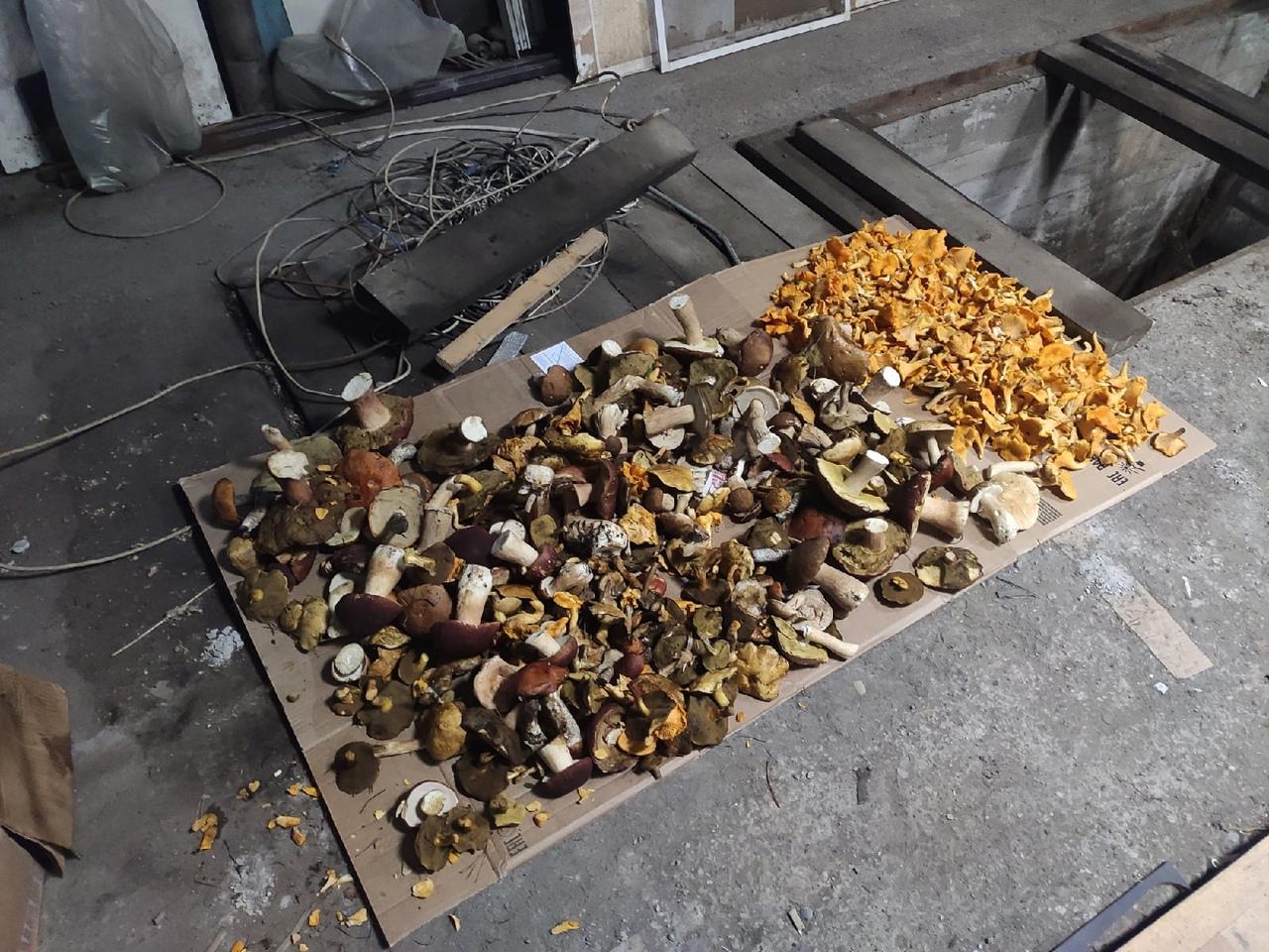 Фото Грибное безумие выходных – новосибирцы хвастаются добычей: где и сколько грибов нашли в августе 2021 года 5