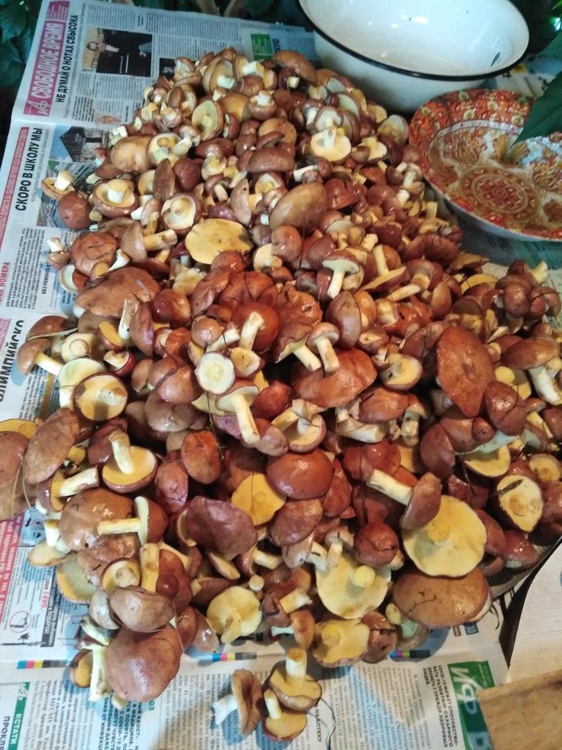 Фото Грибное безумие выходных – новосибирцы хвастаются добычей: где и сколько грибов нашли в августе 2021 года 4