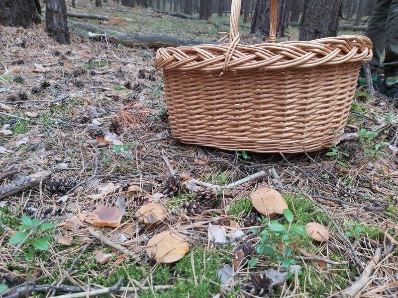 Фото «Вывозят вёдрами»: новосибирцы хвастаются богатым урожаем грибов 13