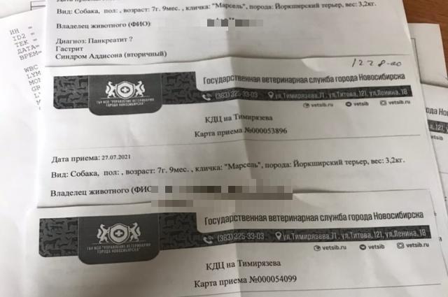 Фото «Мой друг умирал один в холодном боксе»: жительница Новосибирска обвиняет ветеринаров в смертельном лечении 2