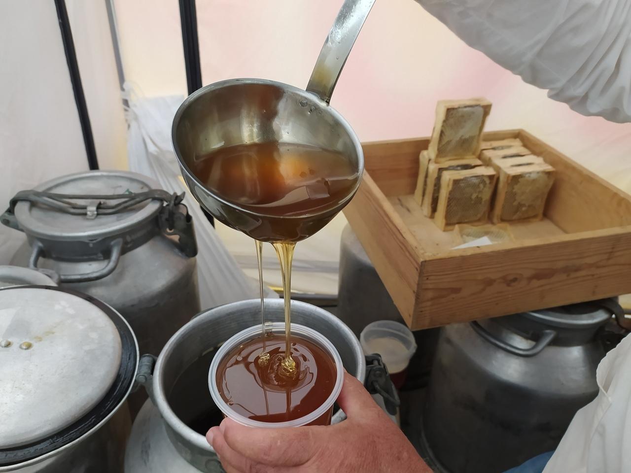 Фото «Ужасные боли в животе, чесотка, даже нос опух»: аллергики из Новосибирска рассказали, почему не едят мёд 2