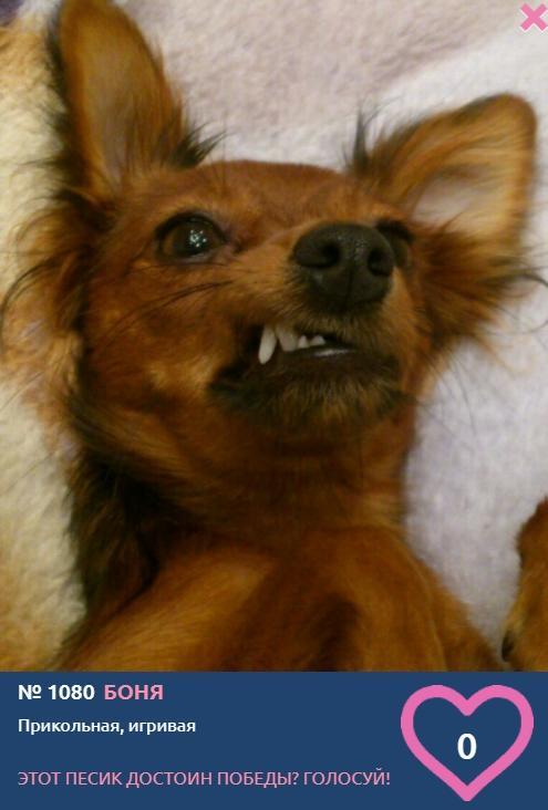 Фото «Ну что за морда, что за глазки»: пять очаровательных красоток стали участницами конкурса «Главный пёсик Новосибирска» 4