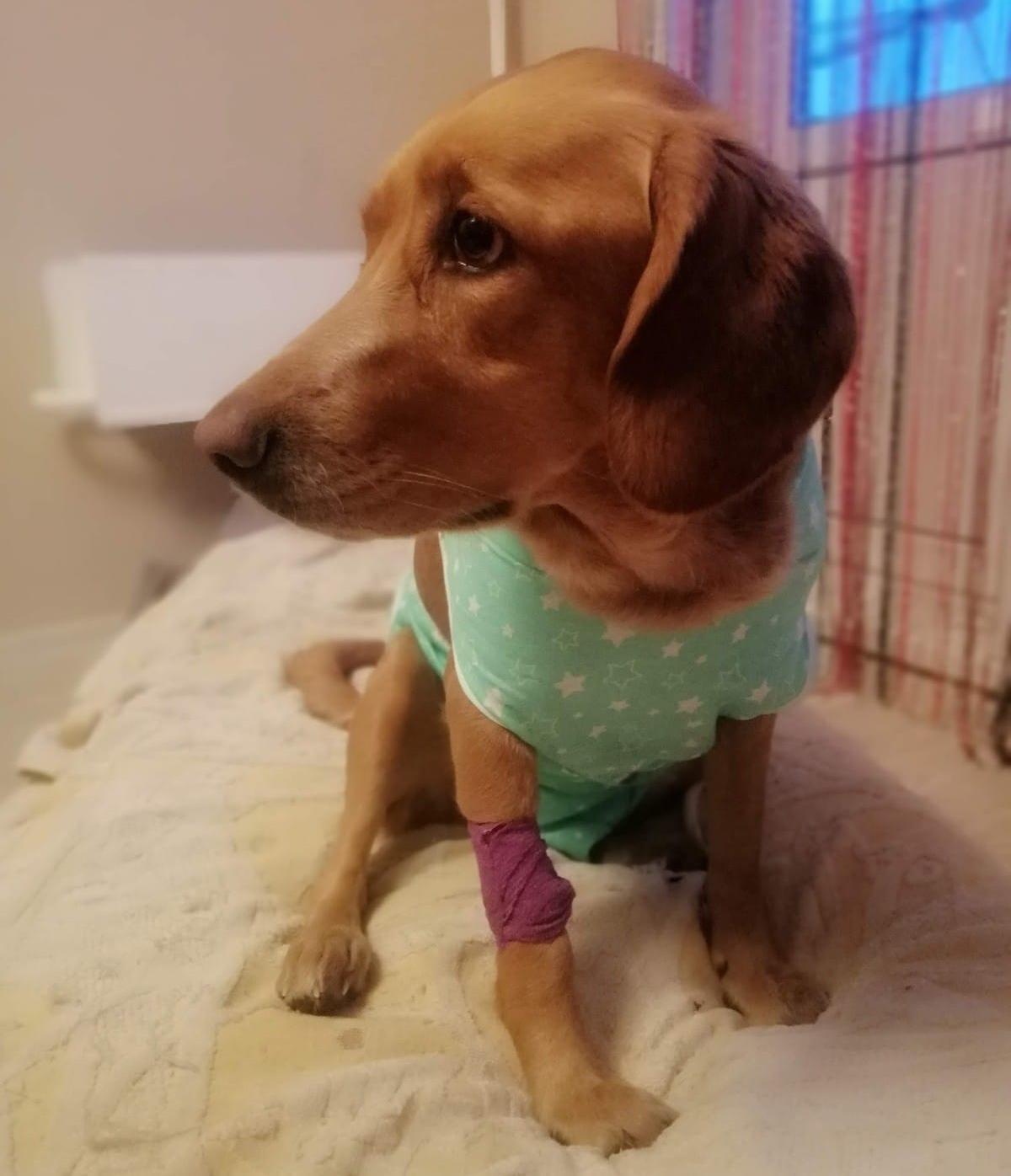 Фото «Проглотила мячик и попала к хирургу»: как финалистка конкурса «Главный пёсик Новосибирска» пострадала от любви к игрушкам 9
