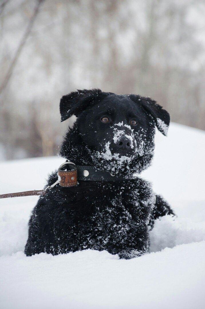 фото Приют для бездомных животных в Новосибирске завалило снегом 2