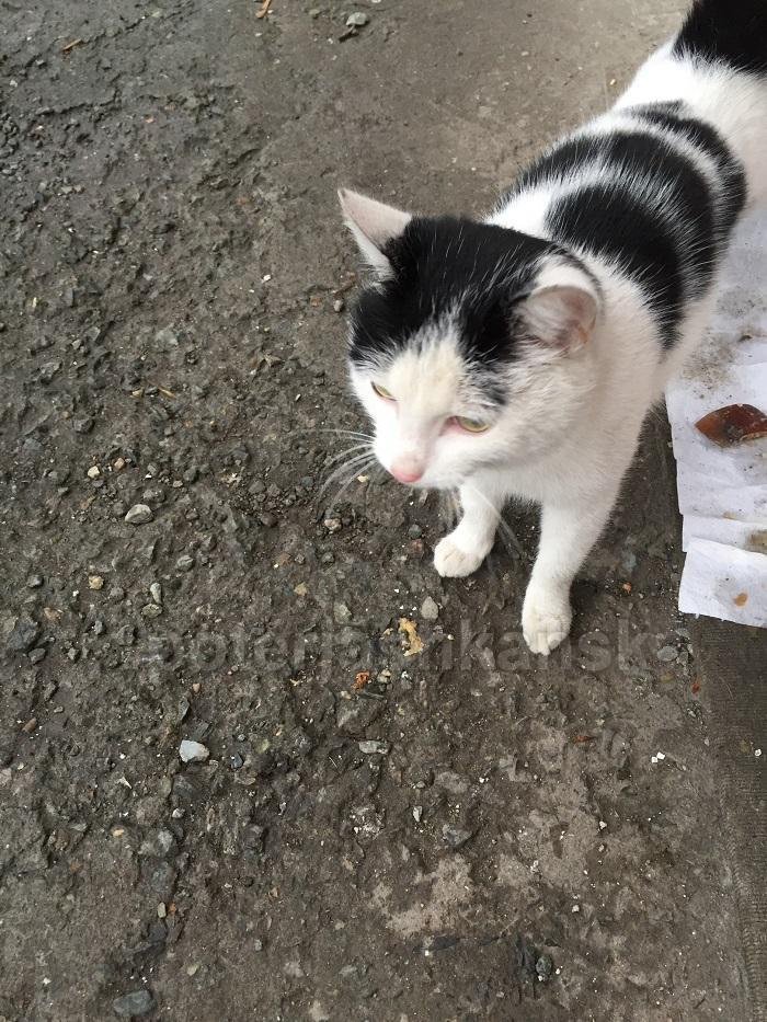 Фото Не дал себя кастрировать: кот ударился в бега по пути в ветклинику в Новосибирске 3