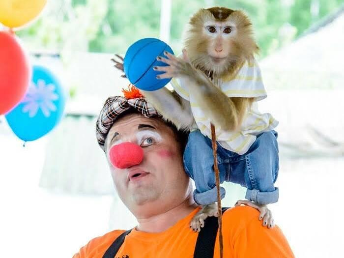 фото «Ребёнок, который никогда не вырастет»: профессиональная дрессировщица рассказала, как это - быть «мамой обезьяны» 5
