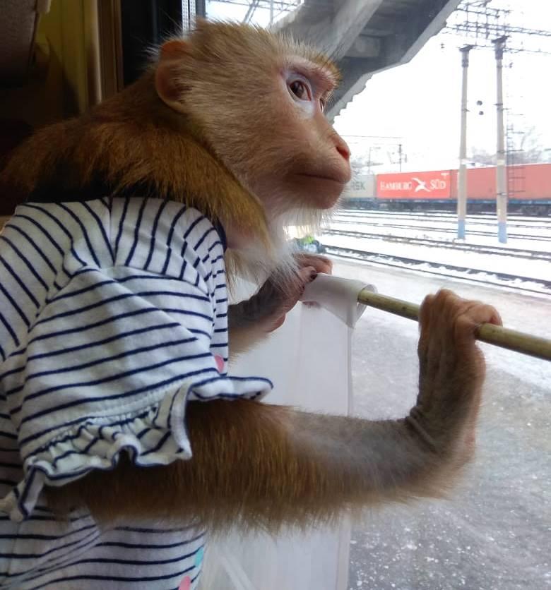 фото «Ребёнок, который никогда не вырастет»: профессиональная дрессировщица рассказала, как это - быть «мамой обезьяны» 3