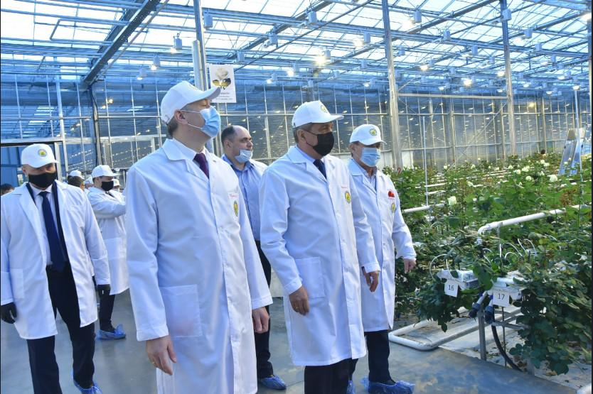 Фото Побывали в цветнике: полпреду и губернатору показали розовые теплицы под Новосибирском 3