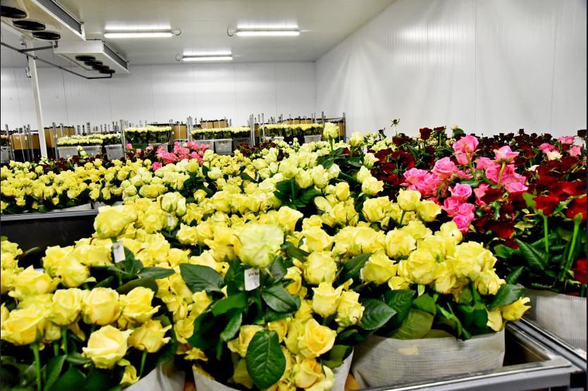 Фото Побывали в цветнике: полпреду и губернатору показали розовые теплицы под Новосибирском 5