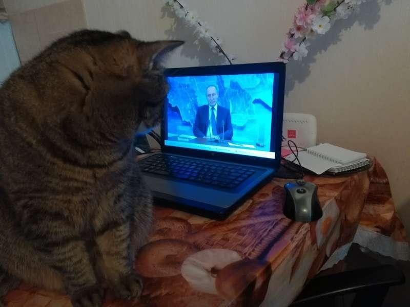 Фото Прямая линия с Путиным - онлайн-трансляция 12
