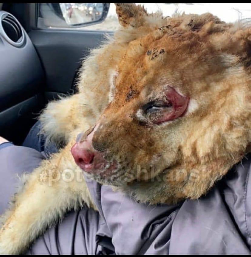 Фото В Новосибирске собирают помощь для сгоревшего собачьего приюта 2