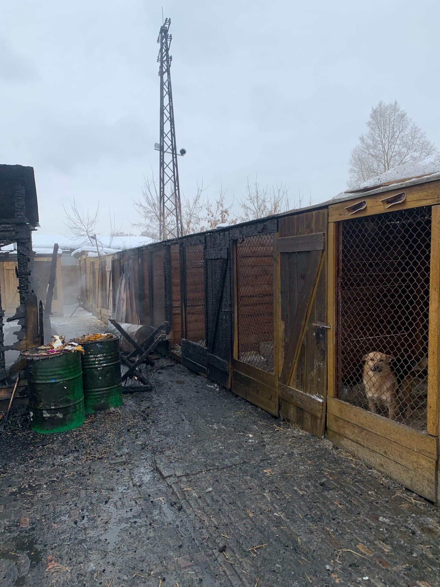 Фото В Новосибирске собирают помощь для сгоревшего собачьего приюта 3