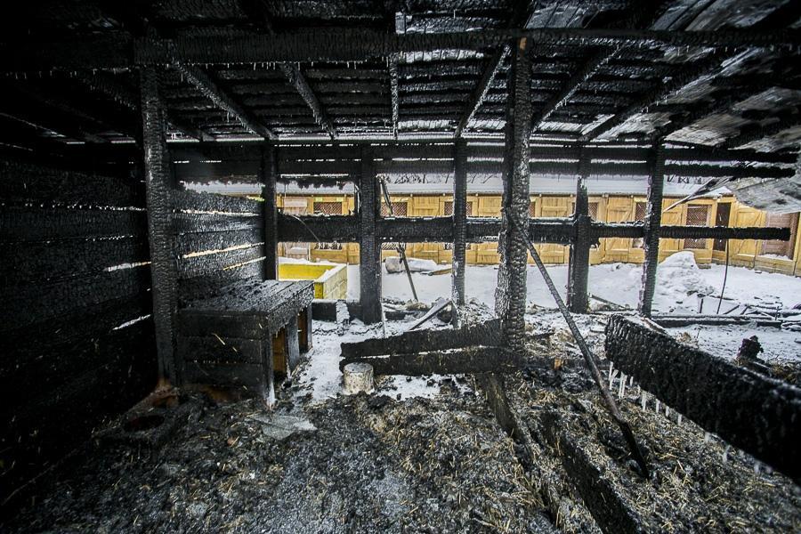 фото Вой стоял оглушительный: страшные подробности пожара в новосибирском приюте, где заживо сгорели собаки 3