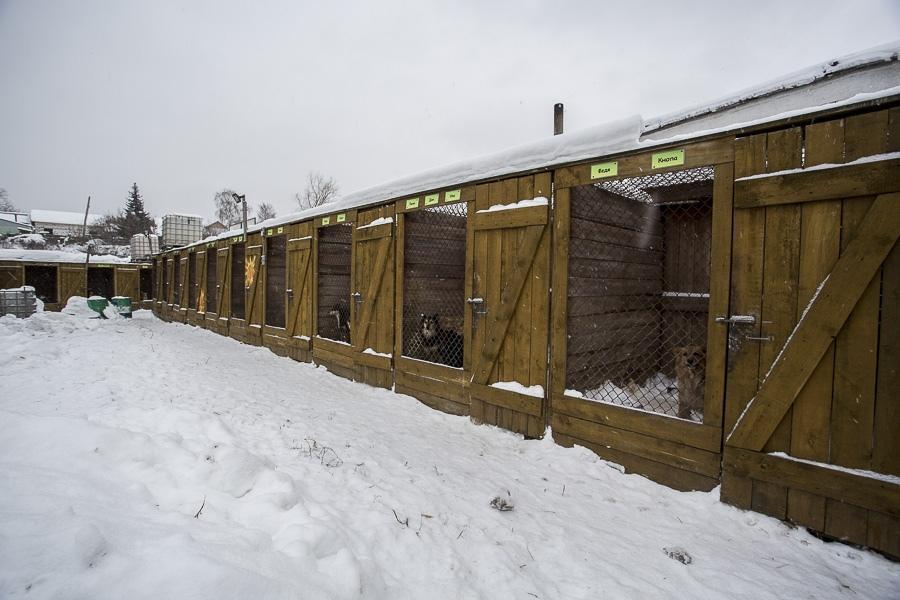 фото Вой стоял оглушительный: страшные подробности пожара в новосибирском приюте, где заживо сгорели собаки 8