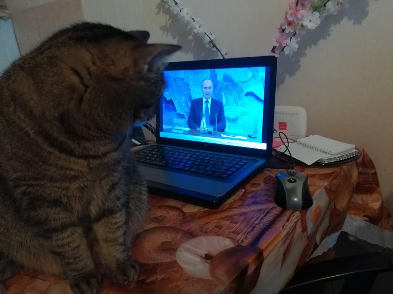 Фото Путин на экране: как котики, депутаты и дольщики в Новосибирске смотрят большую пресс-конференцию президента 11