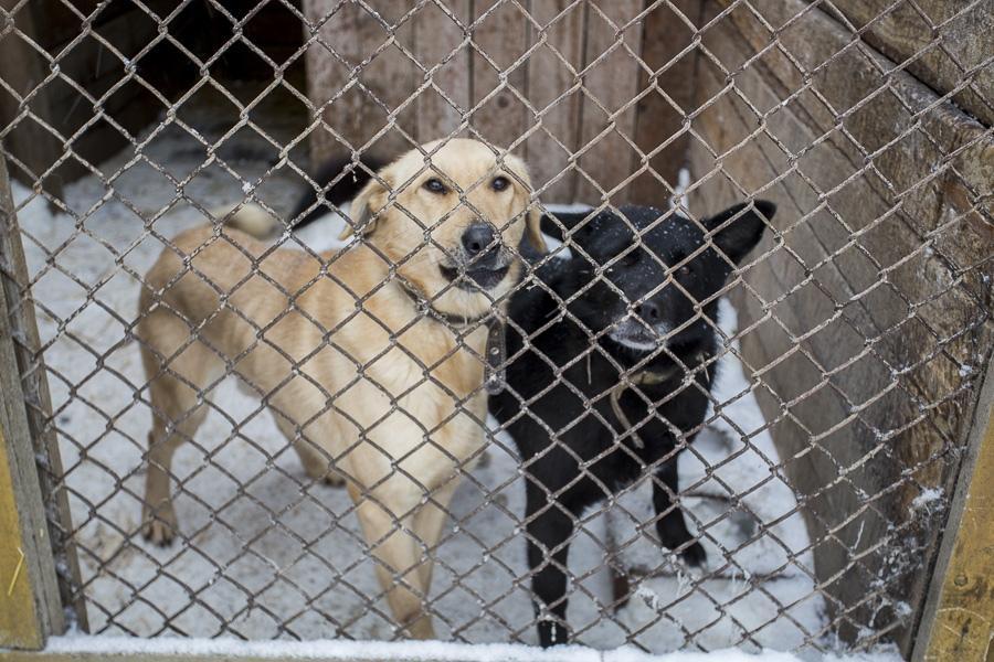 фото Вой стоял оглушительный: страшные подробности пожара в новосибирском приюте, где заживо сгорели собаки 5