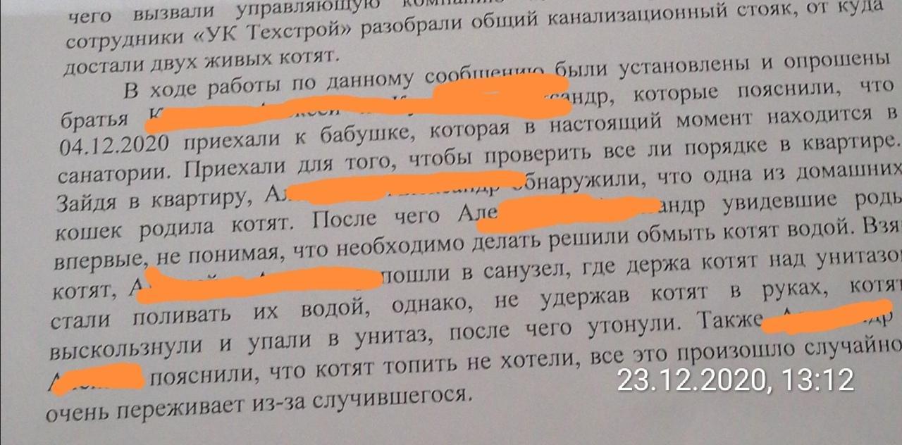 фото Подростки под Новосибирском смыли котят в унитаз: что им за это будет 4