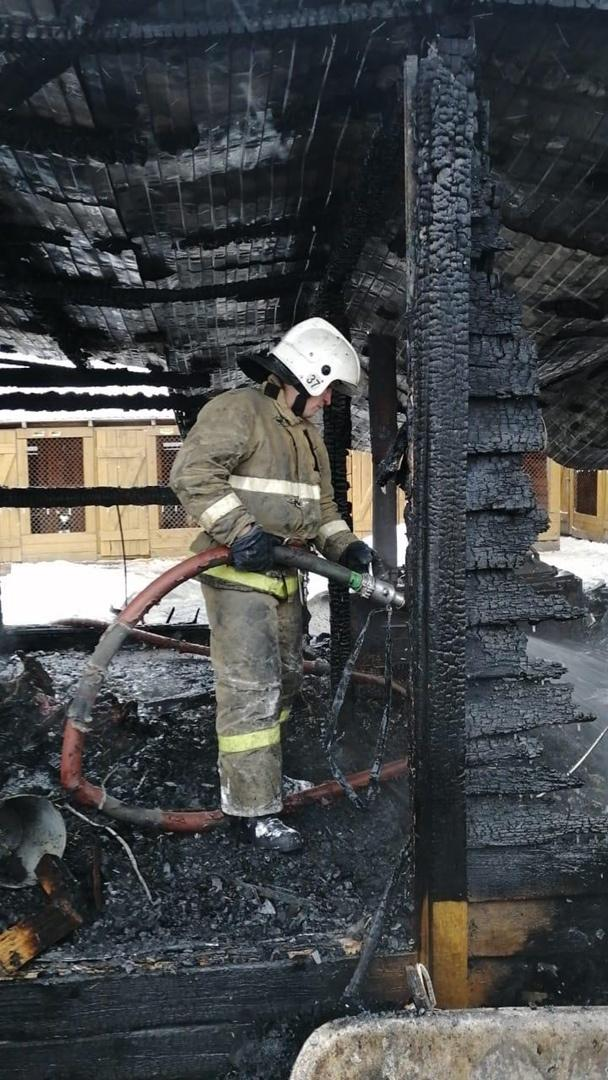 Фото Стала известна причина пожара в собачьем приюте в Новосибирске 2